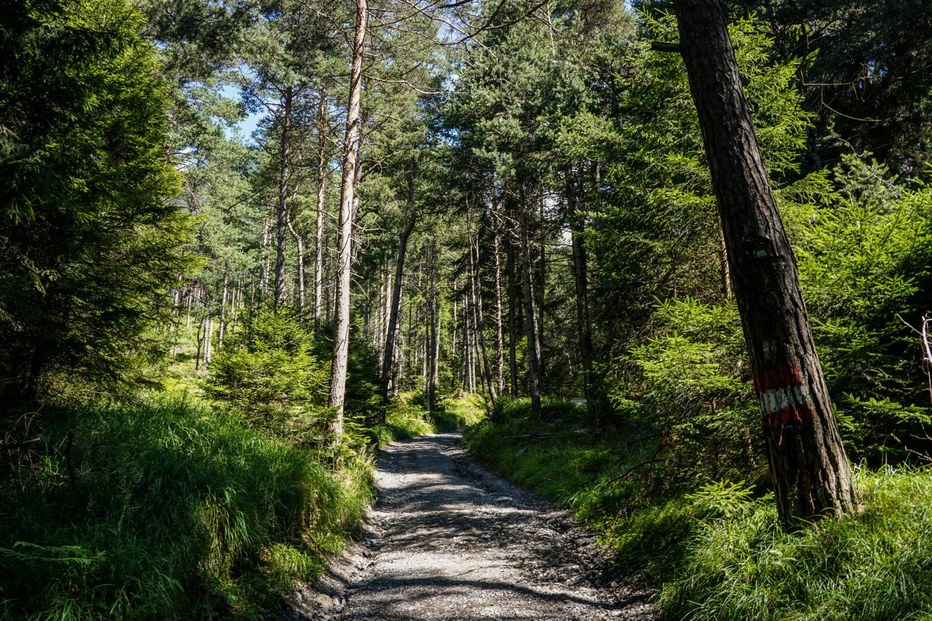 adlerweg-etappe14-1
