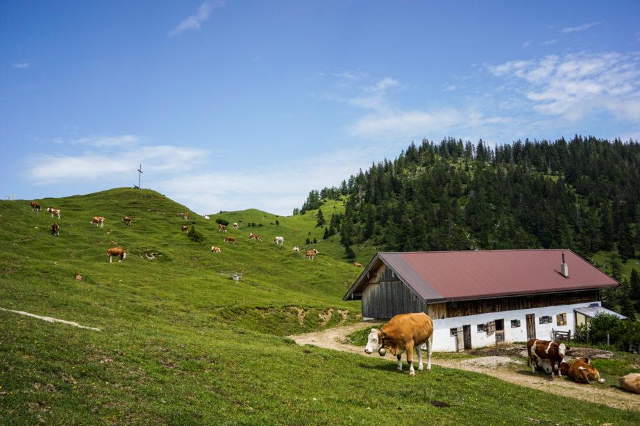 adlerweg-etappe4-16